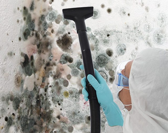 Mold Removal & Remediation - Black Mold | Cape Fear Restoration